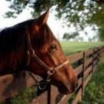 Ocala Florida Horse Land For Sale