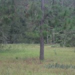 1 acre Open Field on 5.7 acres