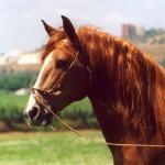 Horses Ocala Florida Village at Hidden Lakes