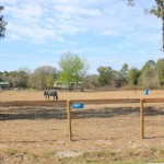 Ocala Marion County Land Citra Land Horse View