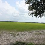 Florida Highlands Dunnellon, Fl Land For Sale