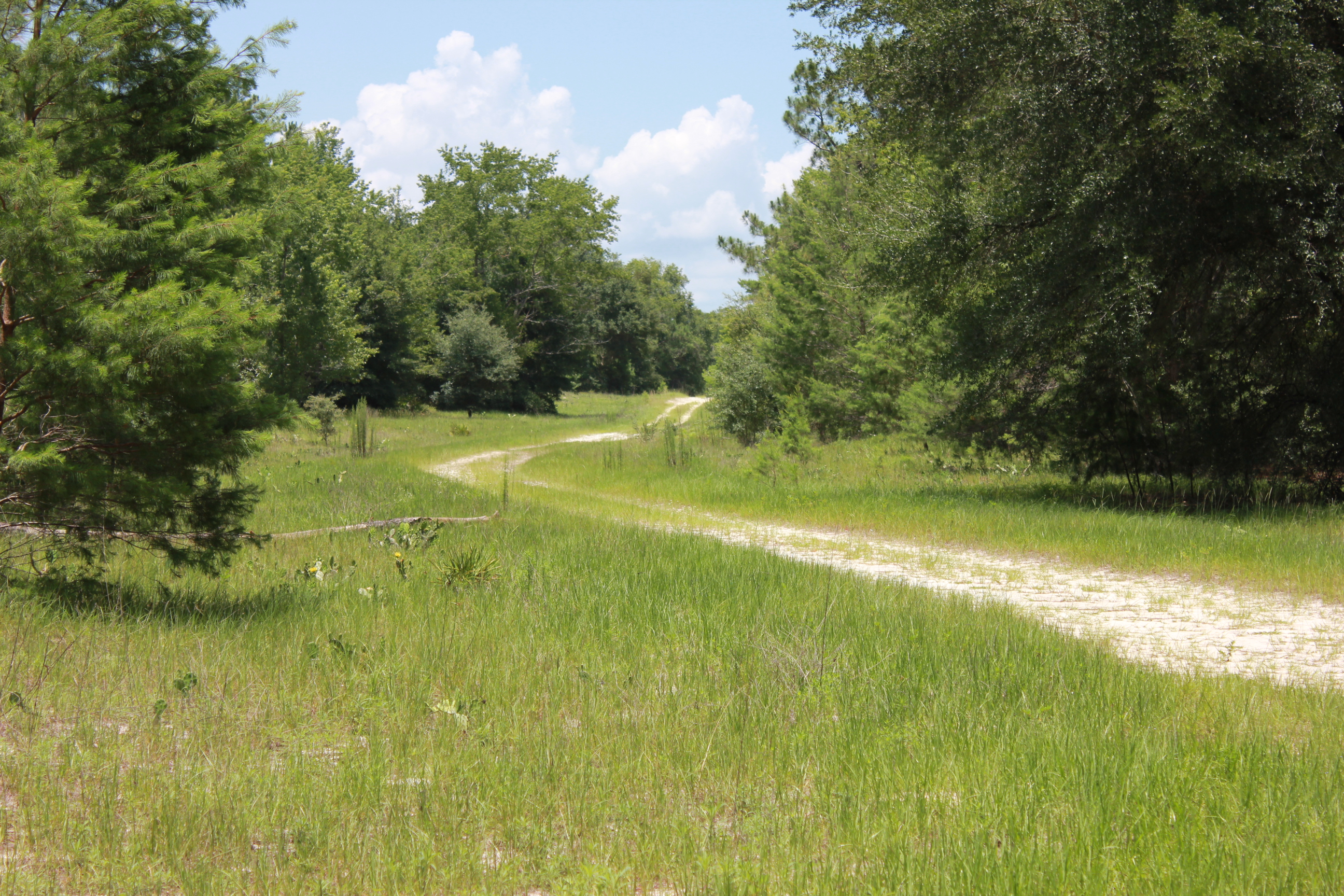 ponoma park florida 5 3 acres for sale