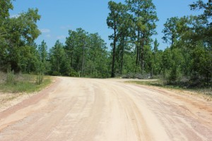 1.98 Acres in Hawthorne Florida