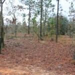 1.94 Acres Interlachen, Florida