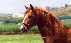 Horses Ocala Florida