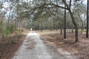 SW 153rd Lane in Dunnellon,Florida  -LOT is on LEFT