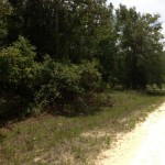 Trees on LOT 3.73 Acres