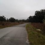 Kingsland Country Estates Forest Glenn