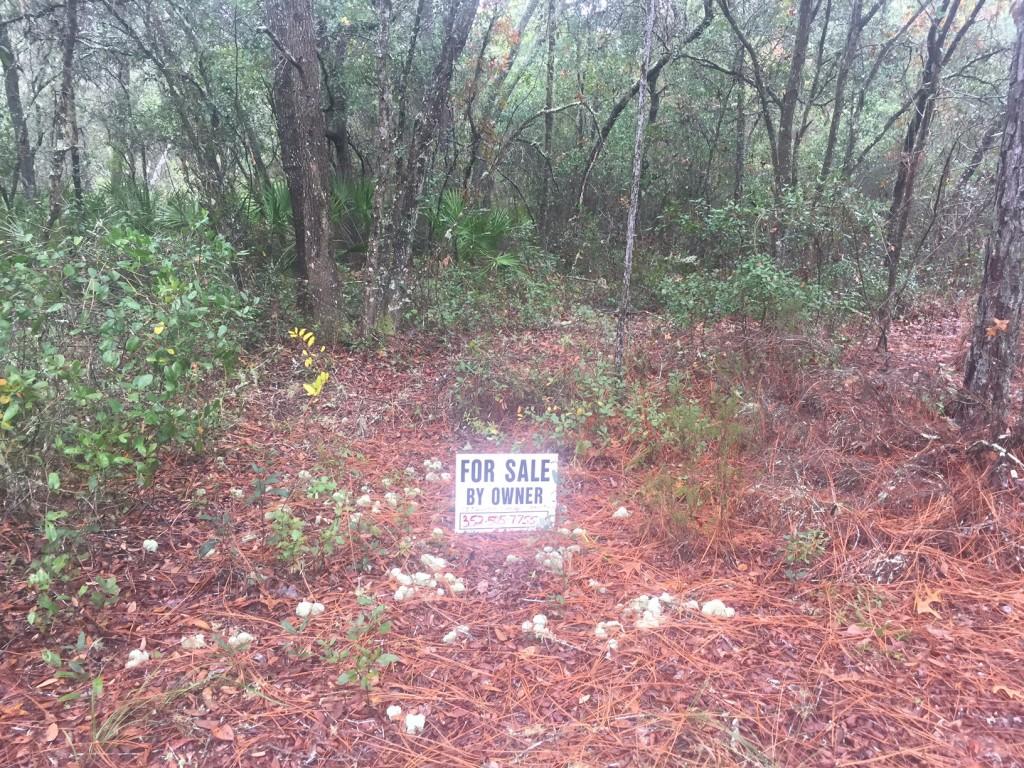 i1-25-acres-florida-highalnds-5