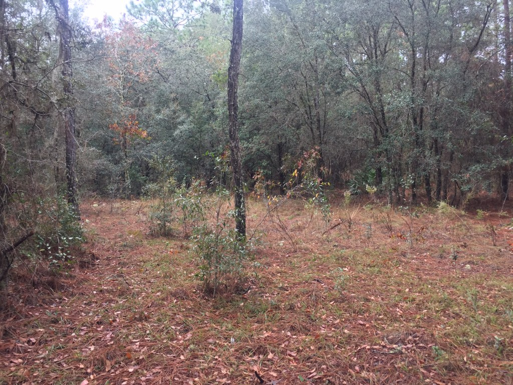2-5-acres-in-lake-tropicana4