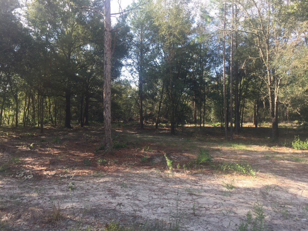 2.5 Acres in Florida High