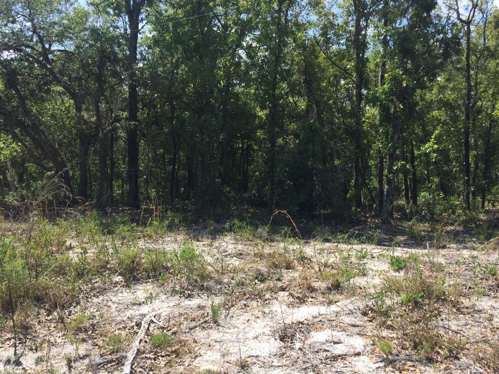 3.75 Acres in Florida Highlands1